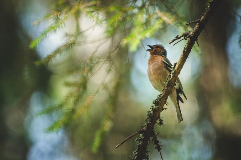 Cómo un hospicio en Gales está conmemorando a los niños con el canto de los pájaros