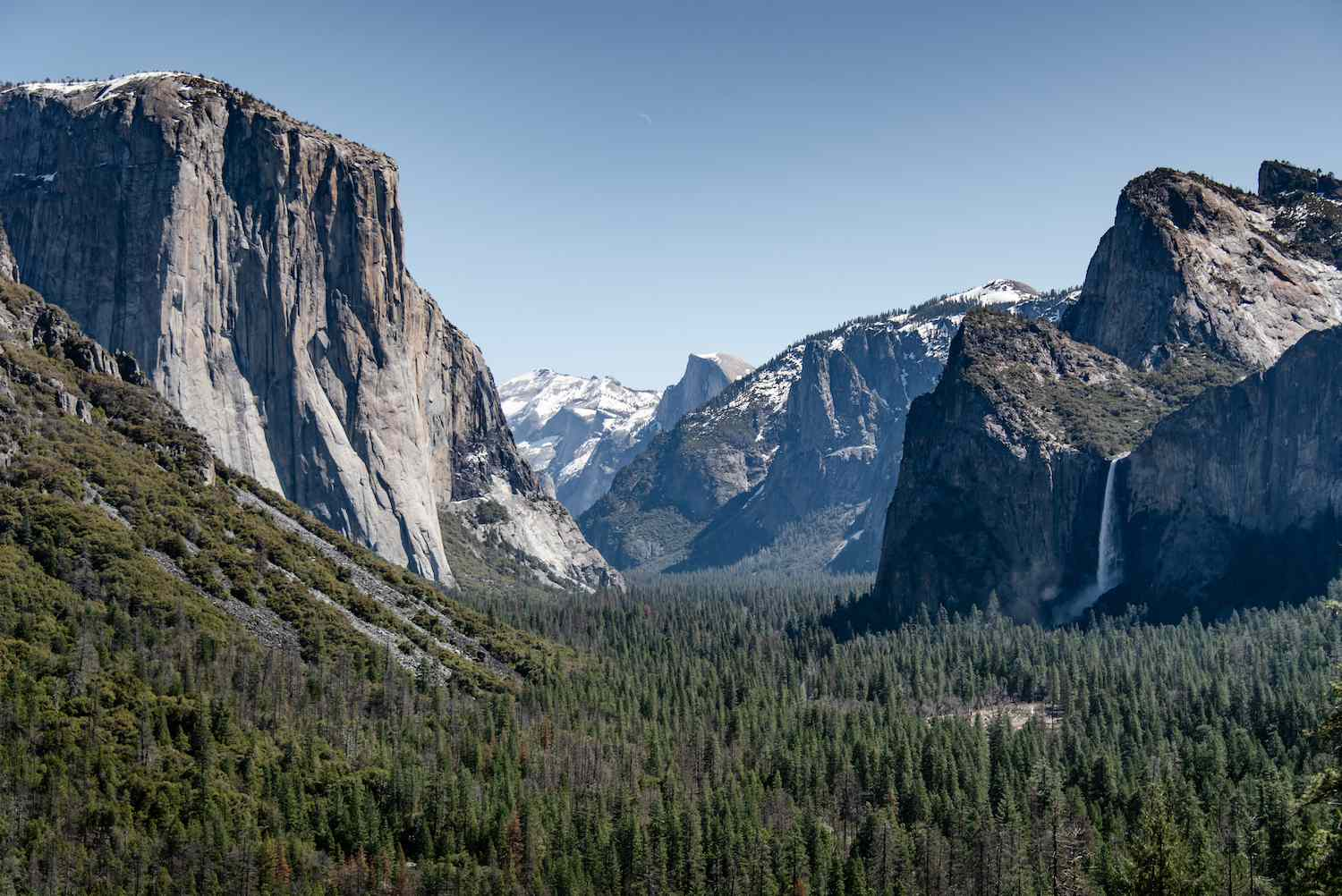 El Capitan rises above the evergreen forests of Yosemite National Park