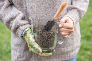 gardener in brown sweater holds glass pitcher of fresh soil and compost for garden