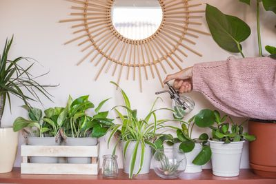 shelf of thriving houseplants under a sun mirror with person in pink sweater spritzing water