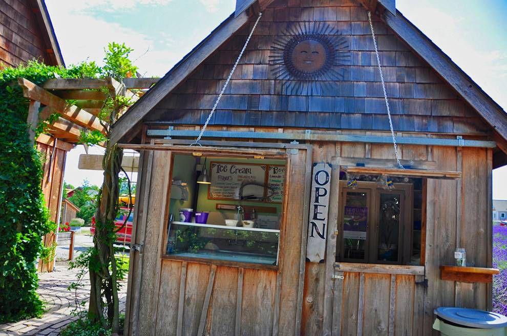 Lavender Capital of North America: Purple Haze lavender ice cream stand
