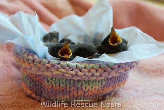 Los voluntarios hacen 'nidos' de ganchillo para la fauna rescatada
