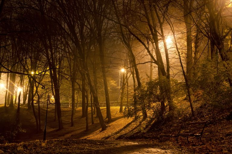 Cómo la contaminación lumínica engaña a los árboles