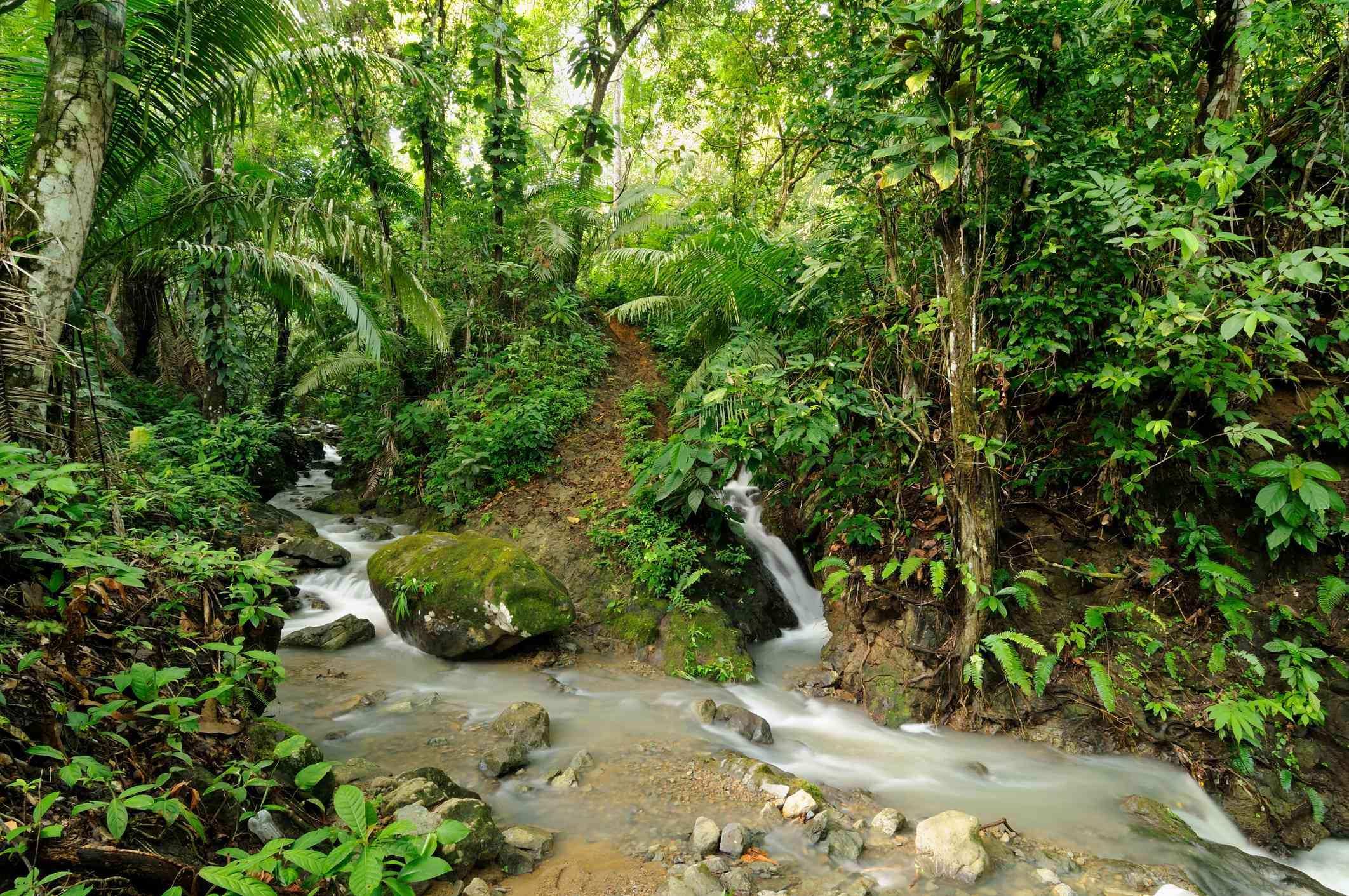 Darien jungle near the border of Columbia and Panama