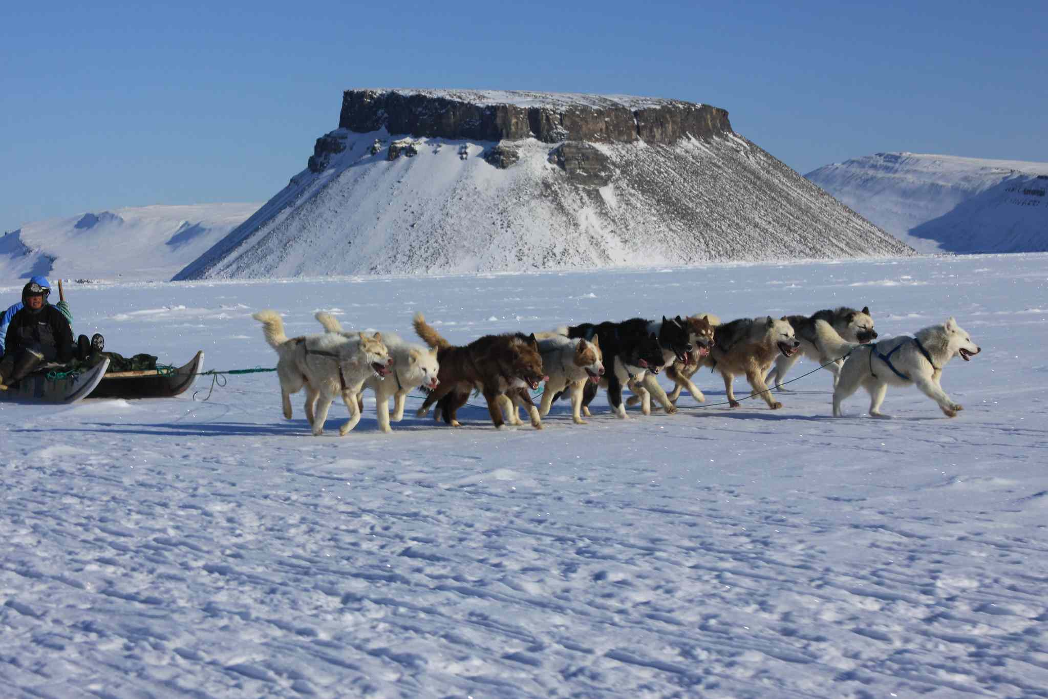 Dog sled team running in the snow in Greenland