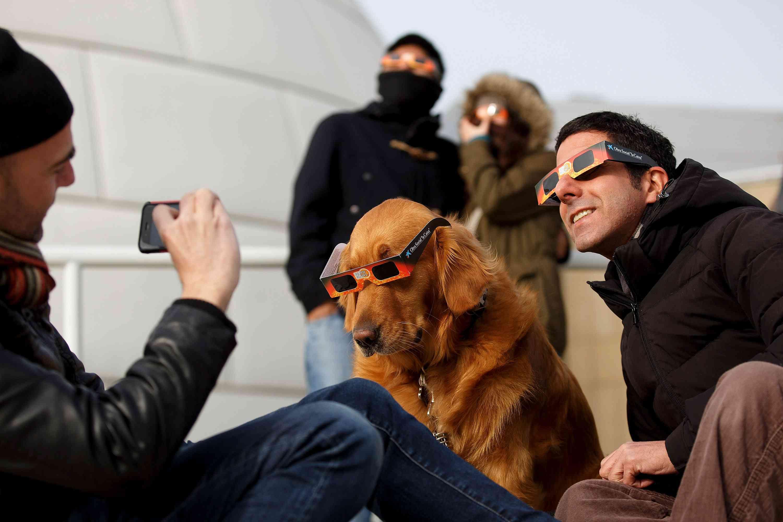 dog wearing eclipse glasses
