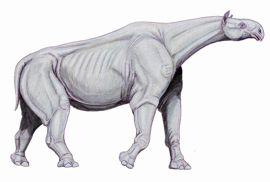 Paraceratherium drawing