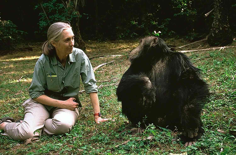 Jane Goodall with a chimpanzee in Tanzania.