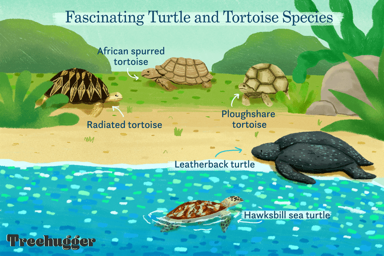 fascinating weird and wonderful turtle and tortoise species