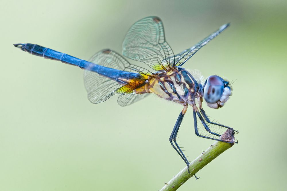8 Things You Never Knew About Dragonflies