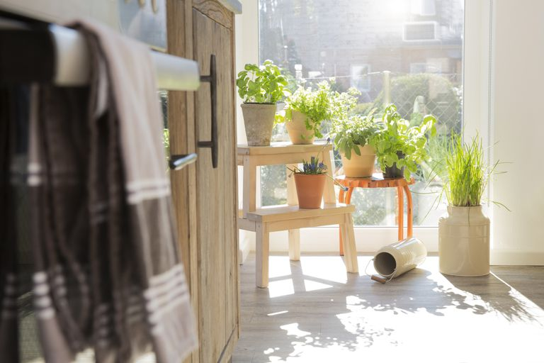 Herbs in flowerpots at the kitchen window