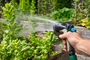 male hand holding sprinkler hose spraying water over vegetable garden