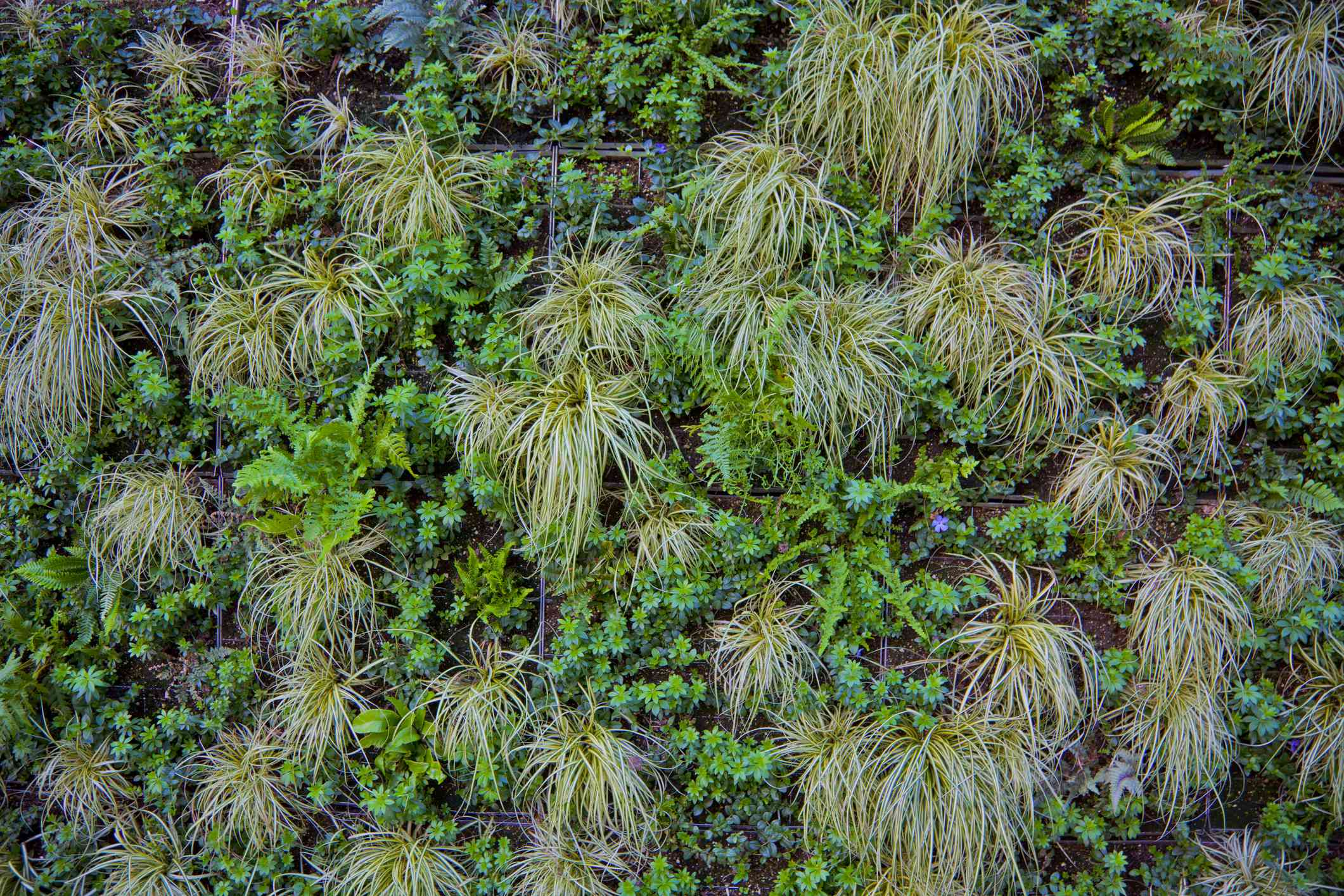 A living plant wall in Vancouver, B.C.