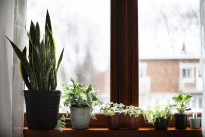 A variety of house plants in pots sit on a windowsill