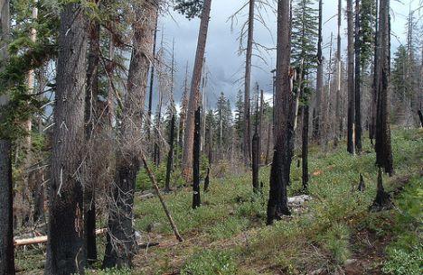 forest fire oregon cascade range photo