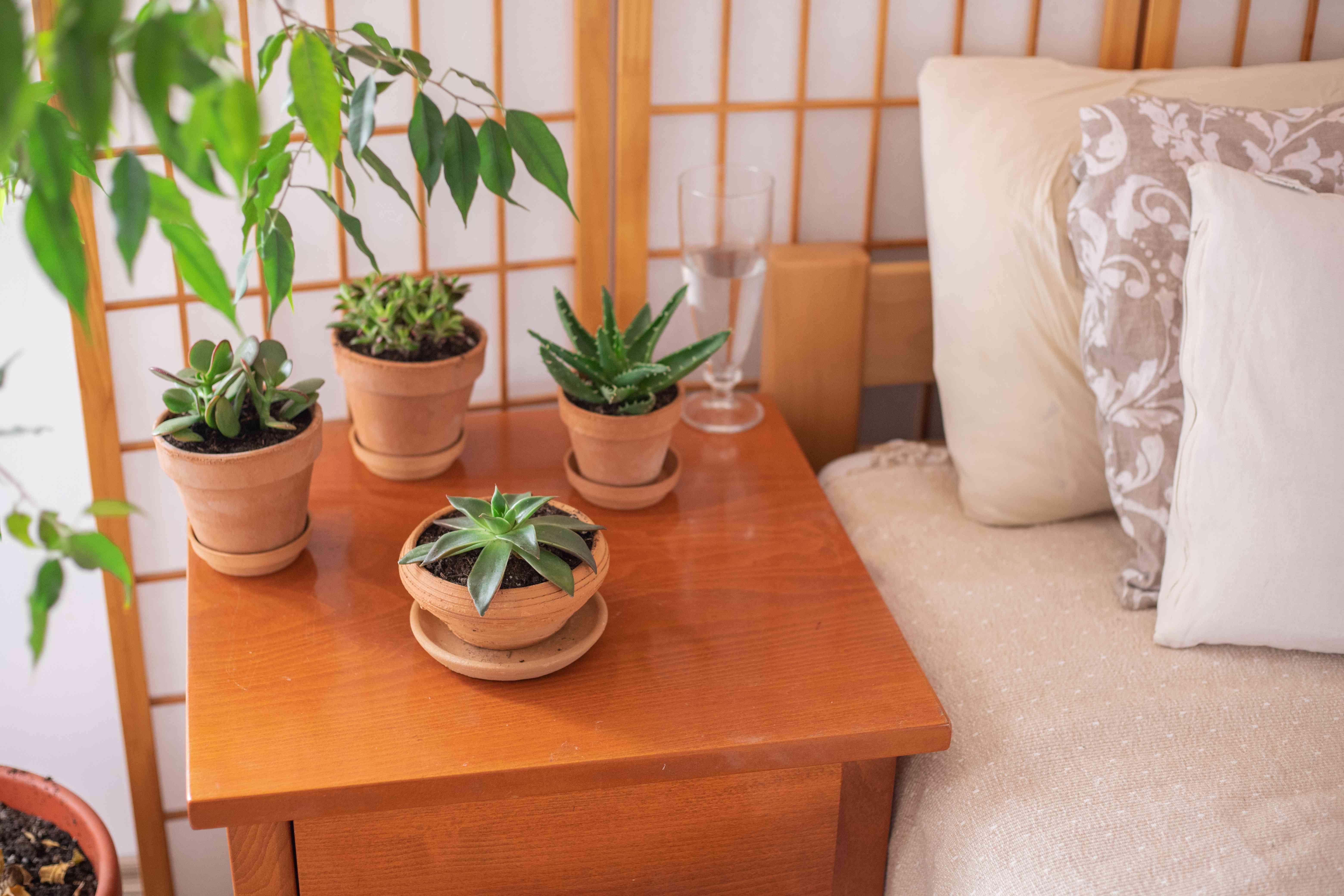 terra cotta pots with succulents near bedroom