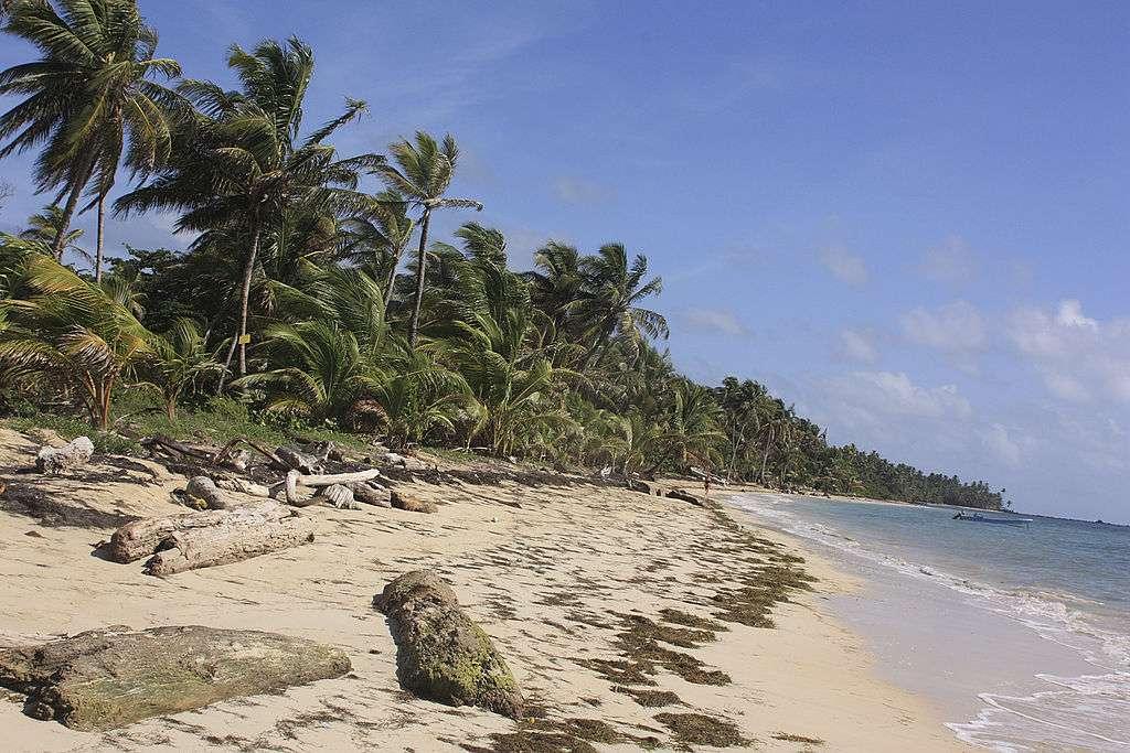 Tall palm trees, sand, and seaweed along the coastline of Little Corn Island