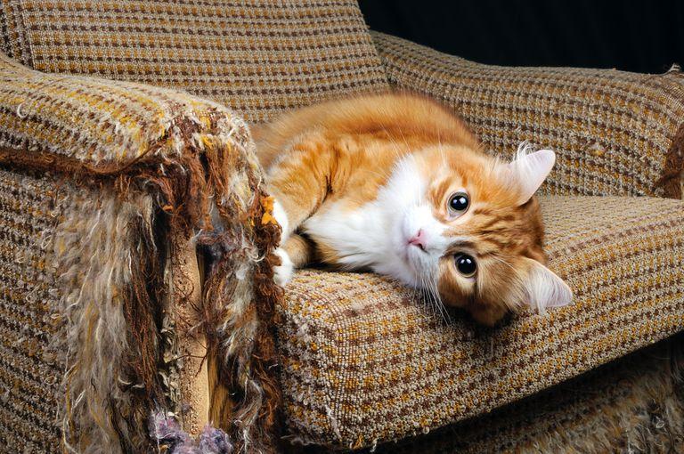 spray to stop cat scratching sofa