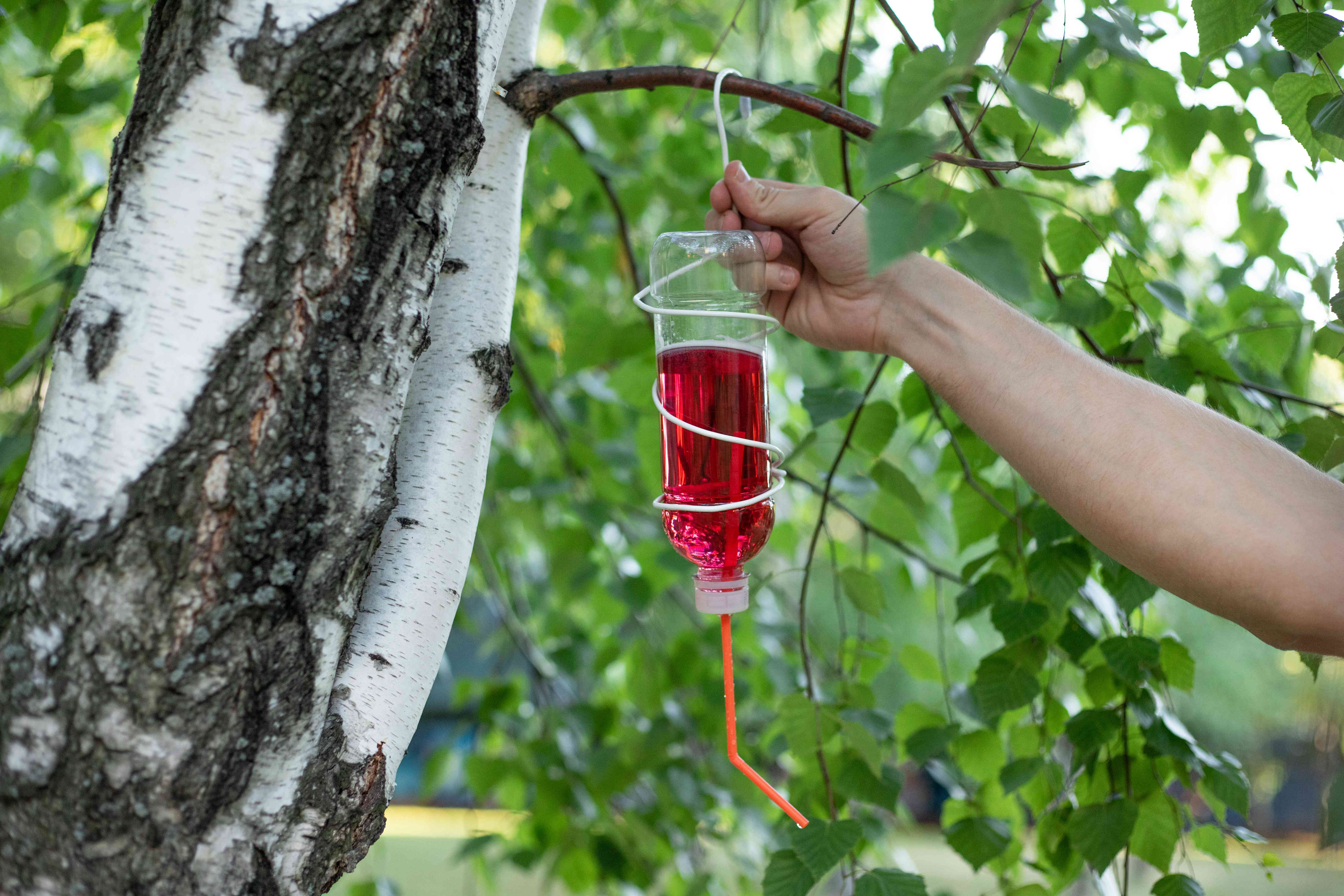 arm hangs diy hummingbird feeder from its coat hanger hook onto tree