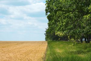 difference between agricultural fields