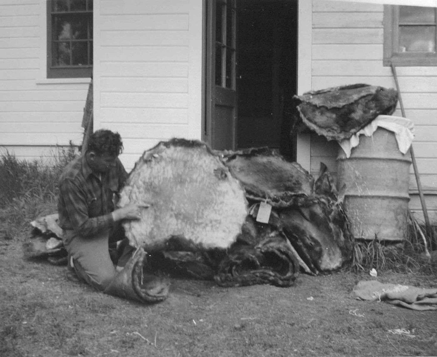 historical photo of an agent holding beaver pelts