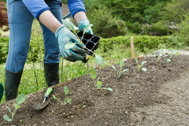 Preparación del suelo del jardín sin labranza