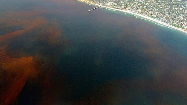 ¿Qué es una marea roja?