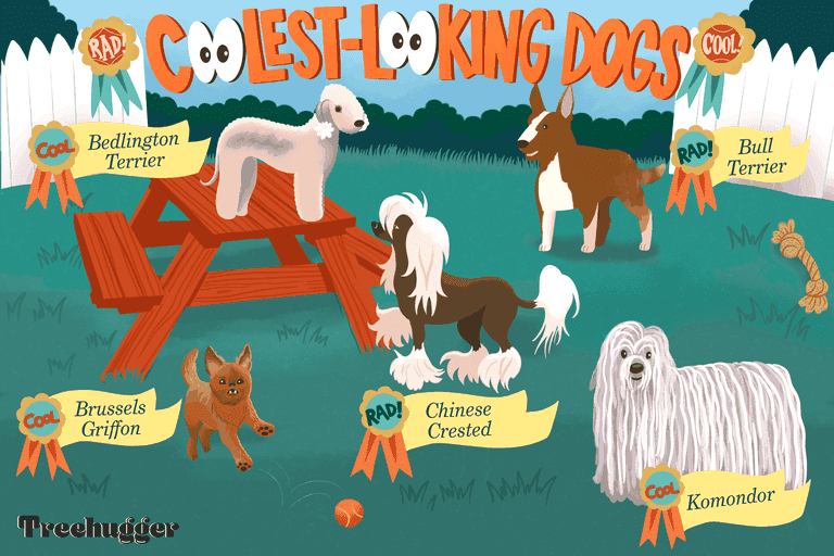 coolest and most interesting looking dogs in the world illustration