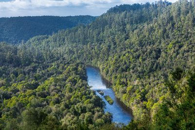 Arthur River surrounded by temperate forest in Tasmania