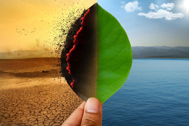 Leaf at the center of two images showing two vastly different landscapes