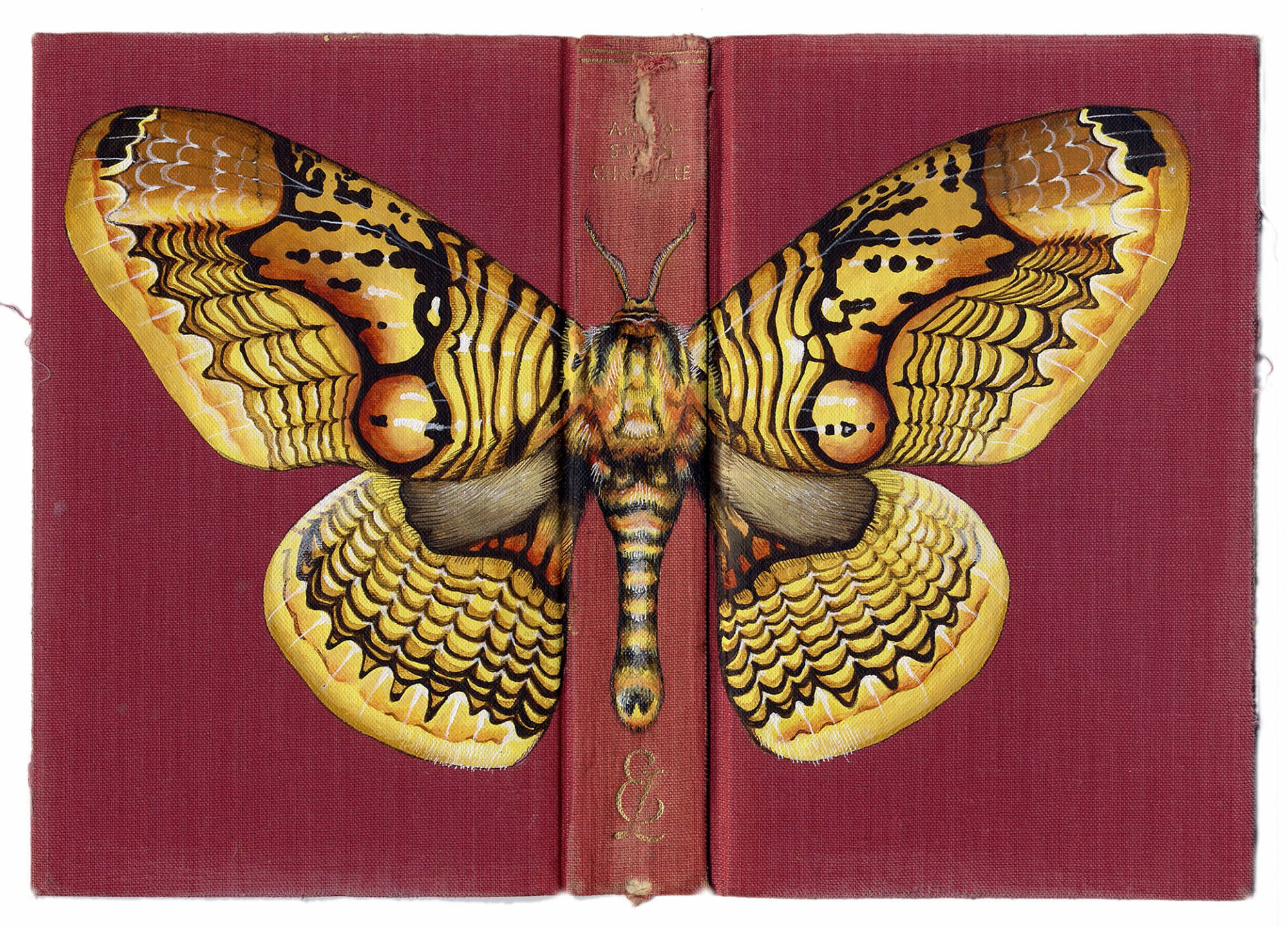 Artist's Insect Paintings on Recycled Book Covers Are Inspired by Love of Nature