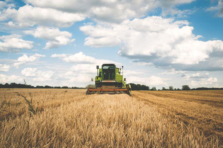 A harvester in a dry field of crops