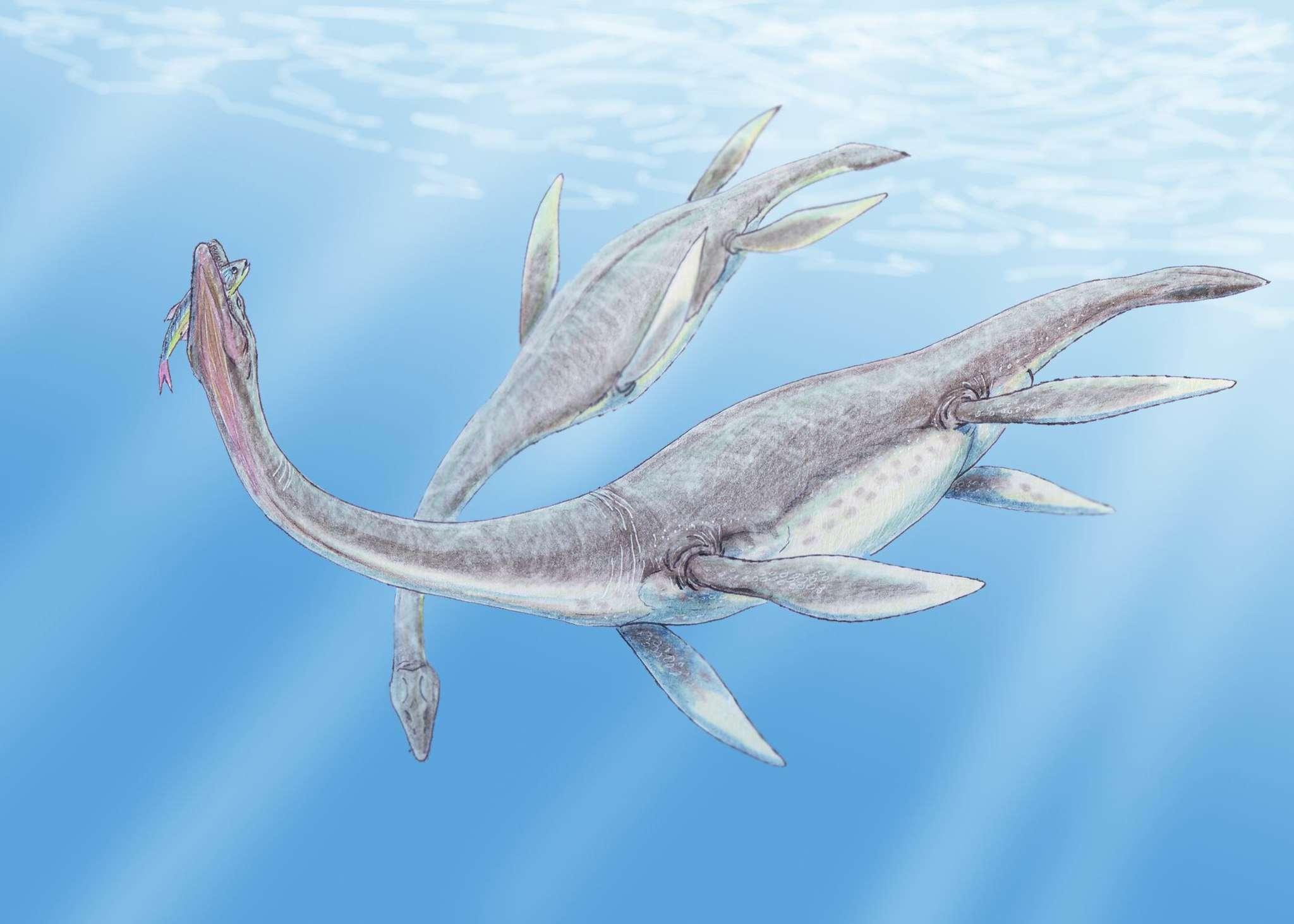 pastel illustration of plesiosaurus underwater, long neck and biting fish