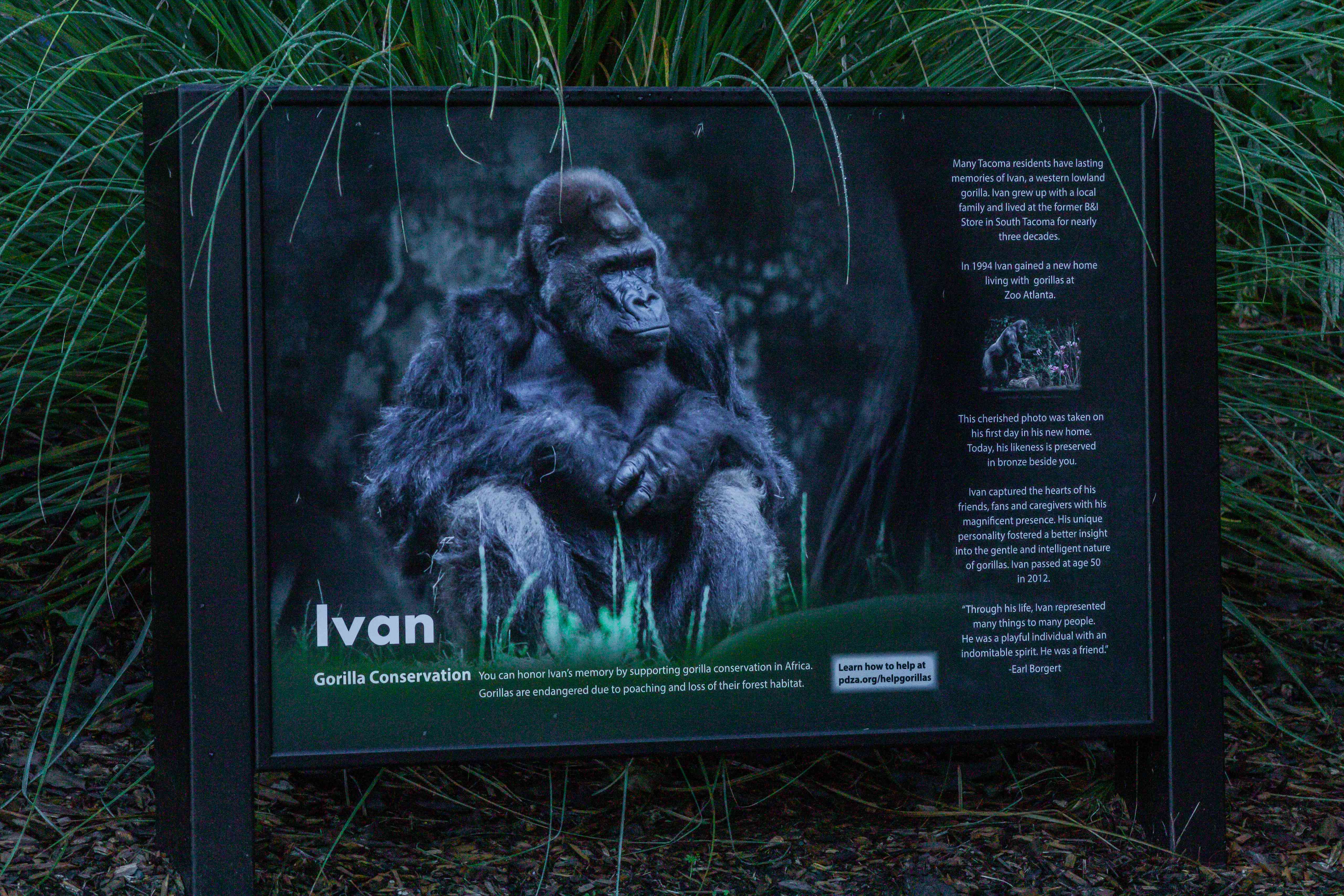 A sign explaining the life of Ivan the Gorilla.