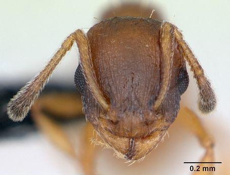 ant-die-alone.jpg