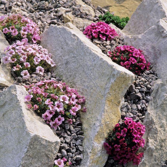 Flowers between slabs of rock
