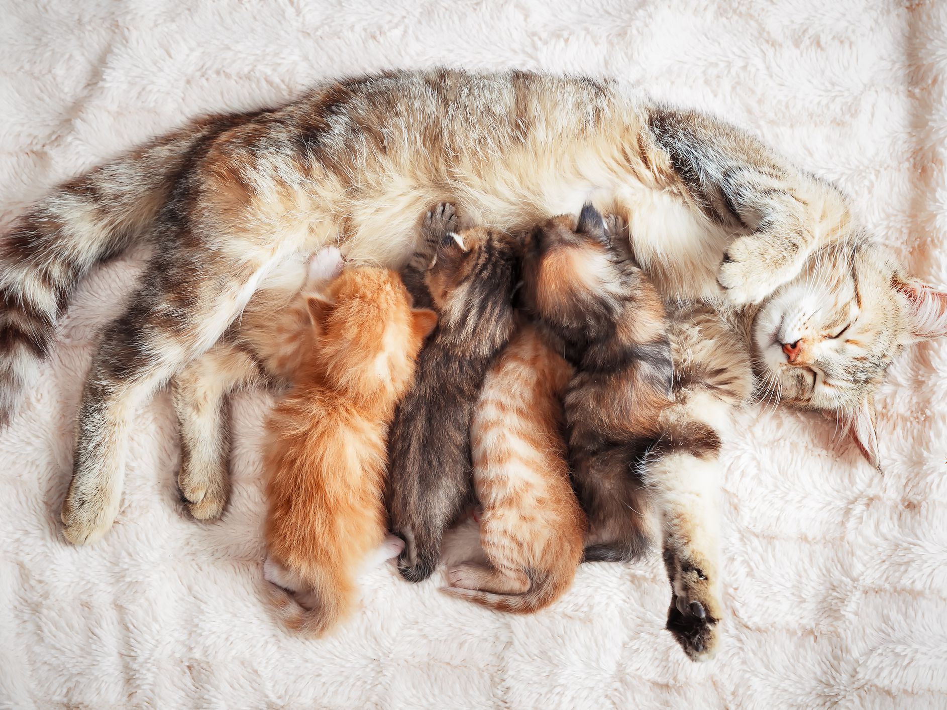 5 Ways to Know if Your Kitten Was Taken Away From Its Mother Too Soon