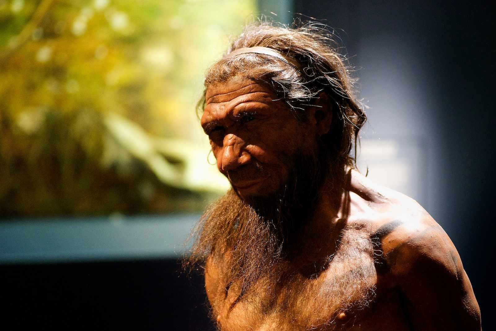 model of neanderthal man in museum
