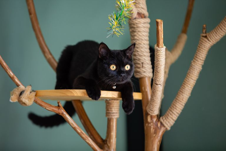 Black cat laying on a perch on a homemade cat tree made from an actual tree