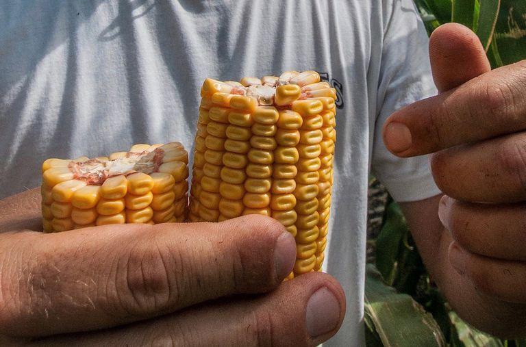 La atmósfera está cambiando los alimentos que comemos