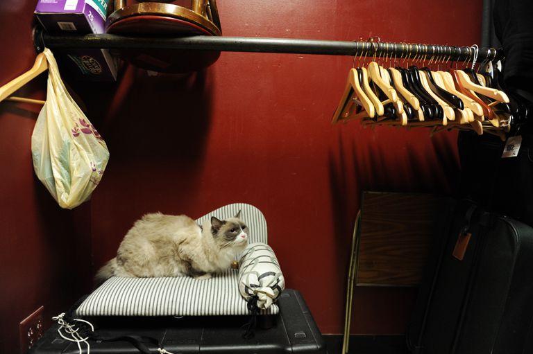 New York City hotel cat
