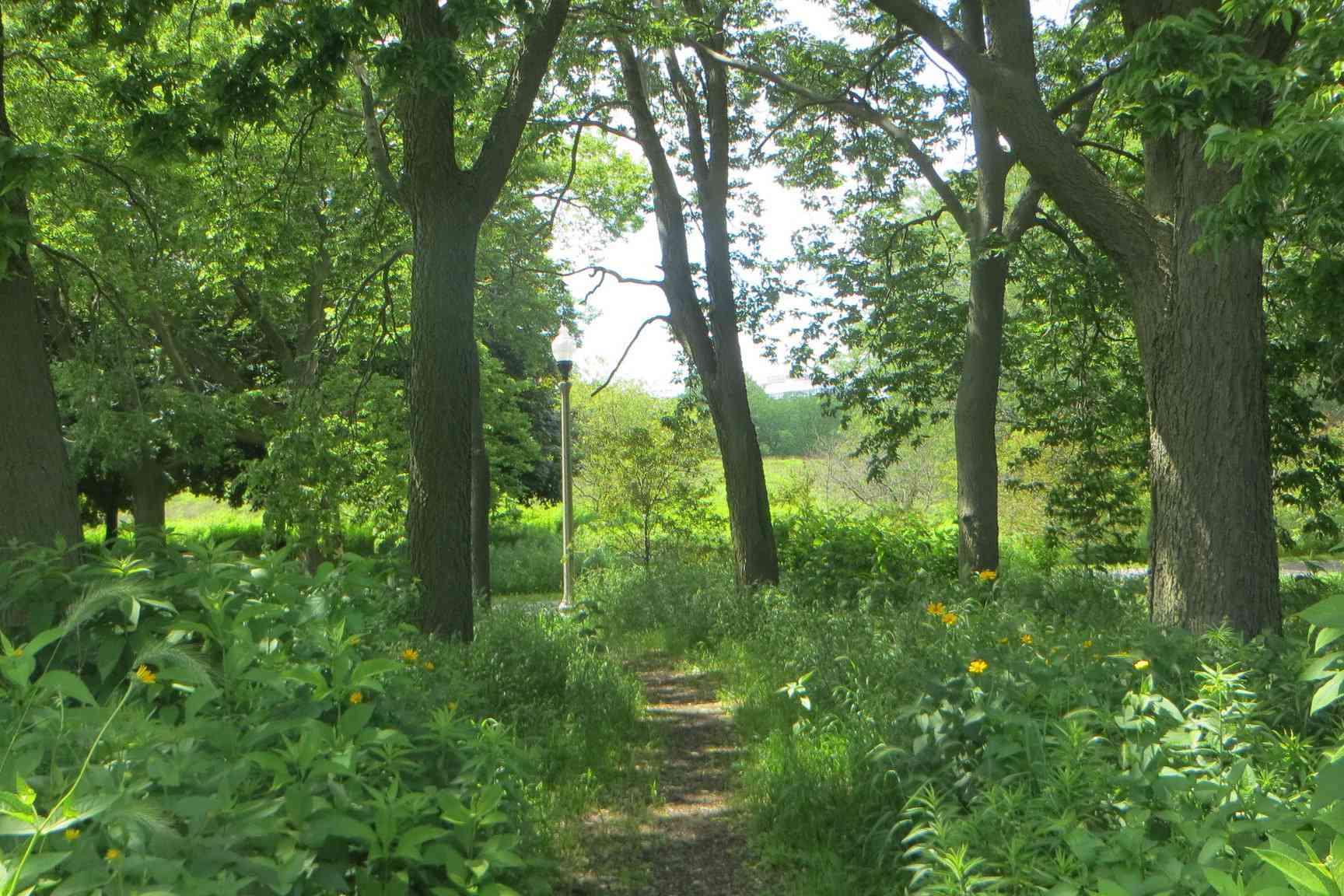 Trees and grass in the Burnham wildlife corridor, Chicago