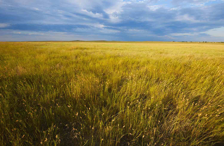 USA, South Dakota, Buffalo Gap National Grasslands