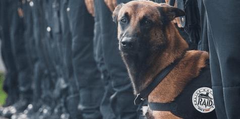 El perro policía asesinado durante una redada en París está de luto