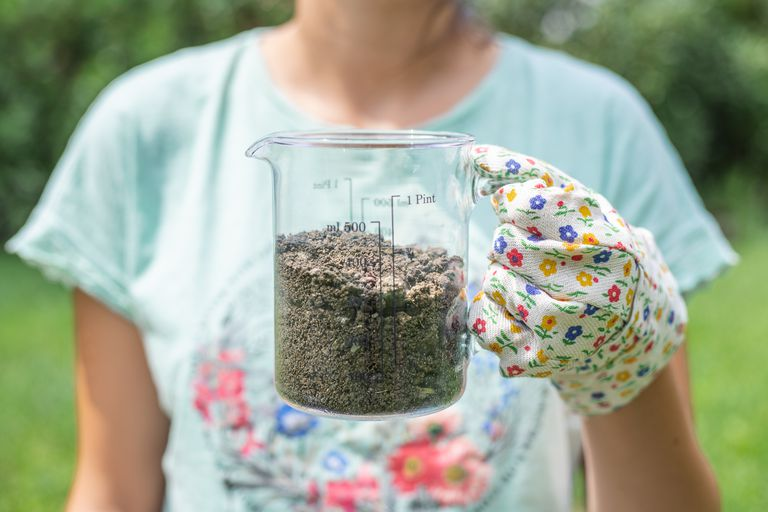 person in blue graphic t-shirt with gardening gloves displays glass measuring cup filled with garden soil