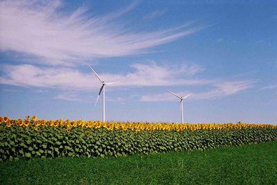 Windmills and sunflowers field