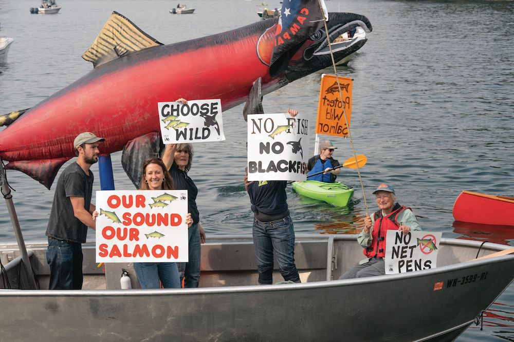 protesters against salmon pens