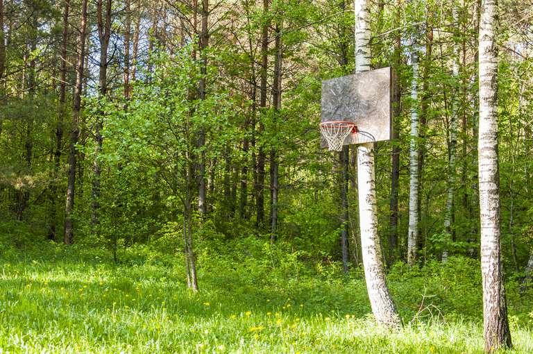 Net Zero in a Forest