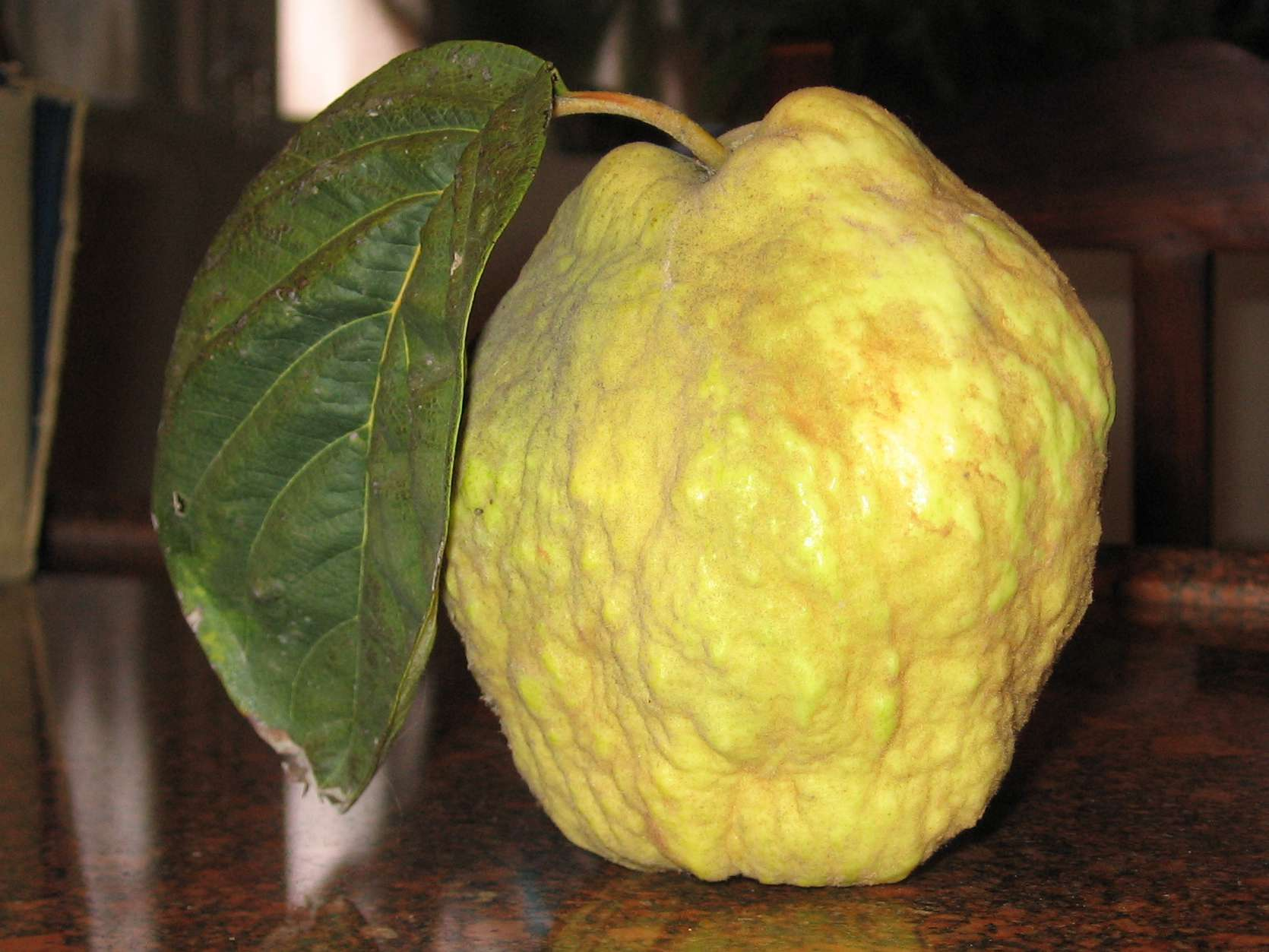 a knobby, yellow-green quince fruit