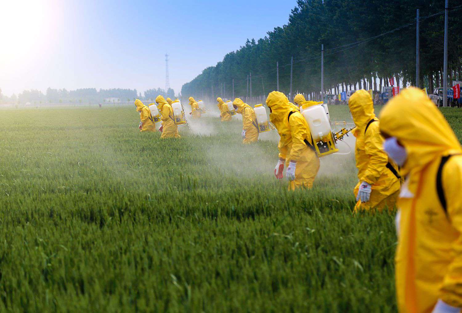 workers spraying pesticide in a field